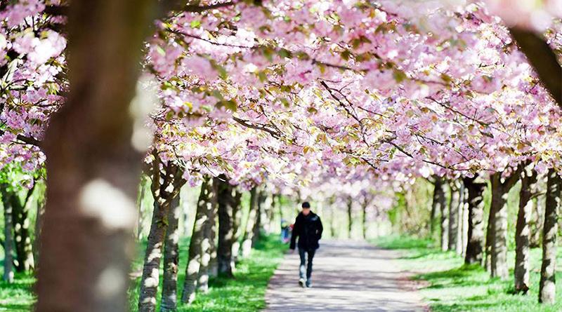 Photo of Sutra počinje proljeće