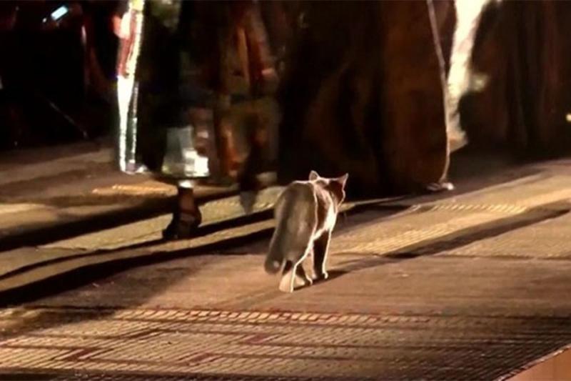 Photo of Mačka prošetala pistom tokom Diorove revije