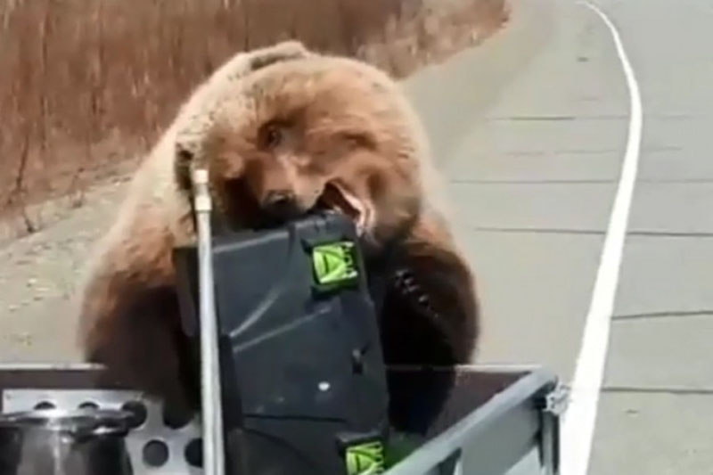 "Photo of Medvjed ""opljačkao"" lovce"