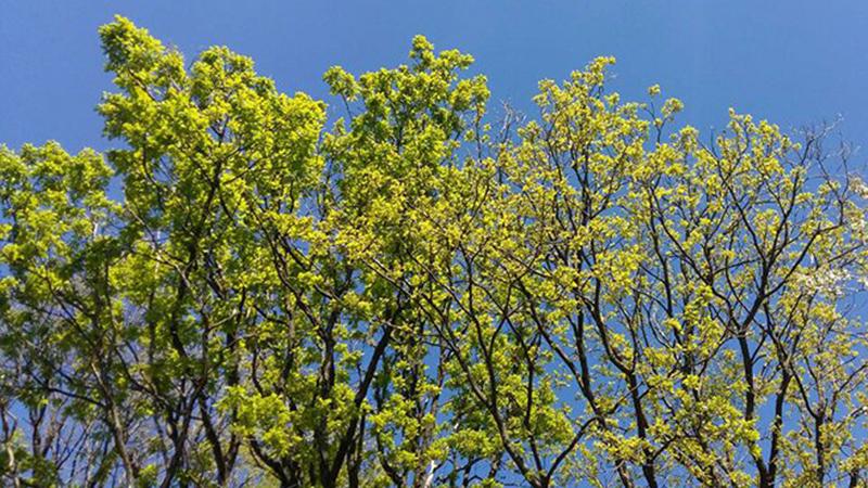 Photo of Vrijeme: Danas sunčano i veoma toplo, ponegdje mogući pljuskovi