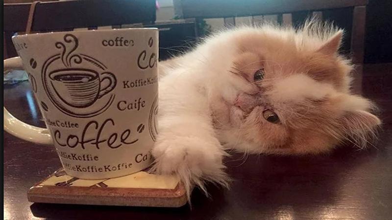 Photo of Louis iz Teksasa mogao bi dobiti titulu najmrzovoljnijijeg mačka na svijetu