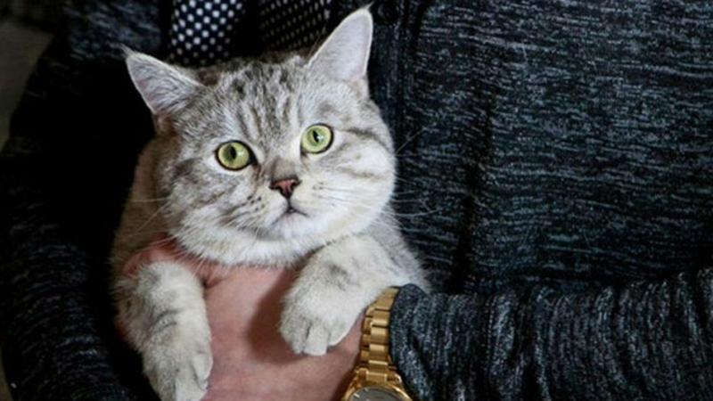 Photo of Preko mačke pokušali da unesu mobilni u zatvor