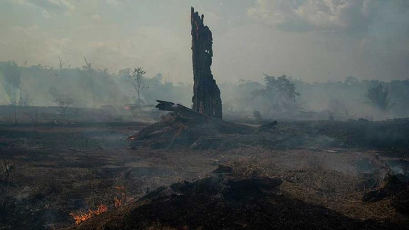 Photo of DW: Šteta od požara u Amazoniji se ne može popraviti