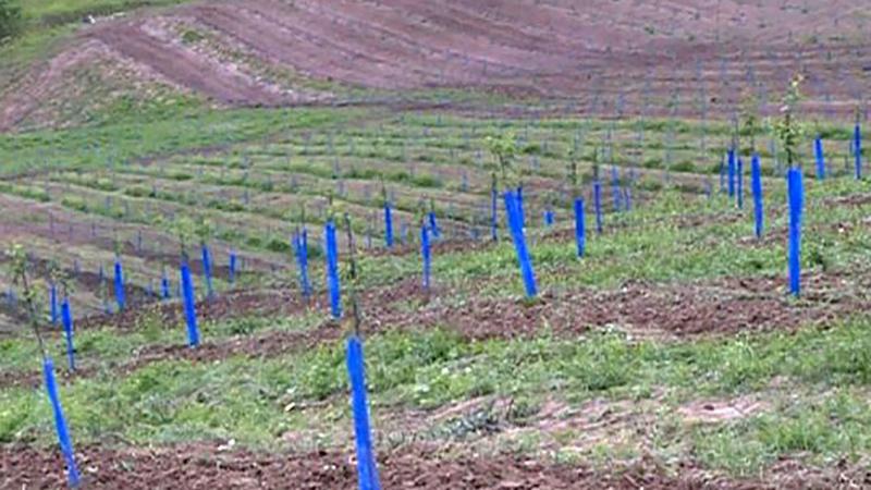 Photo of Agrometeorologija: Vremenski uslovi pogoduju zrenju voća i radovima u polju