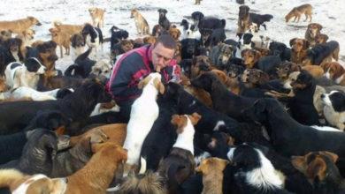 Photo of Čovjek koji se brine o 750 pasa