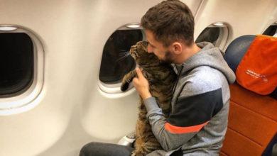 Photo of Pokušao da prokrijumčari debelog mačka u kabinu aviona