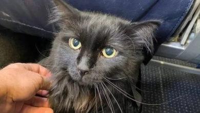 Photo of Vlasnik pronašao izgubljenu mačku 1.900 kilometara od kuće