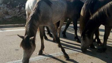 Photo of Putevi: Divlji konji na putu preko prevoja Borova Glava