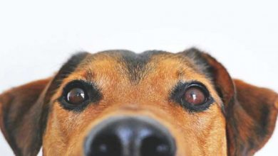 Photo of Pogledajte sajt na kome možete da saznate da li pas umire u filmu
