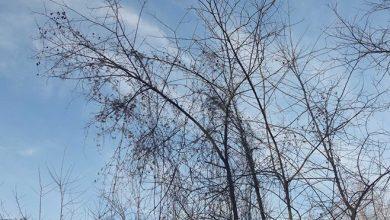 Photo of Vrijeme: Danas oblačno sa sunčanim intervalima