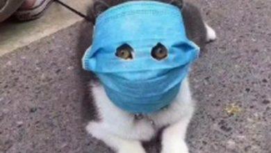 Photo of Prodaja maski za kućne ljubimce u Kini 10 puta veća