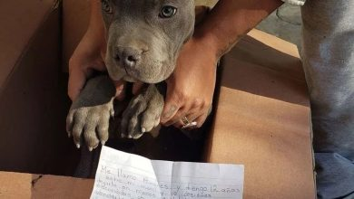 Photo of Dječak ostavio štene i srceparajuću poruku ispred utočišta