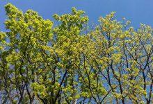Photo of Vrijeme: Danas sunčano i toplo