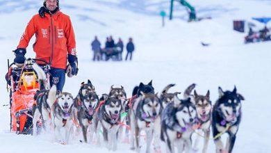 Photo of Zbog Kovida-19 avanturista zaglavljen na Aljasci sa 24 psa