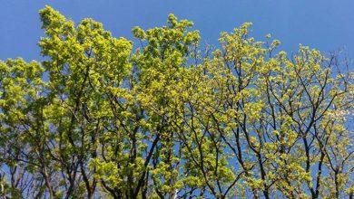 Photo of VRIJEME: Sutra pretežno sunčano i sparno, poslije podne mjestimično kiša