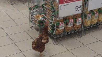 Photo of Kokoš ušetala u prodavnicu i napravila haos