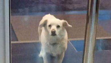 Photo of Pas čekao vlasnika nedjelju dana ispred bolnice