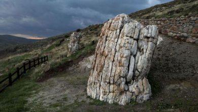Photo of Grčka: Naučnici otkrili stablo staro 20 miliona godina