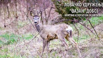 Photo of DOBOJ: U nedjelju lov na šakala