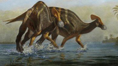 Photo of Ostaci stari 72 miliona godina; U Meksiku identifikovana nova vrsta dinosaurusa