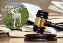 Photo of DOBOJ: Presuda u Doboju; Jagnjad poslala lažnog mesara dvije godine u zatvor