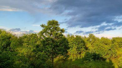 Photo of VRIJEME: Sutra promjenljivo oblačno, krajem dana kiša